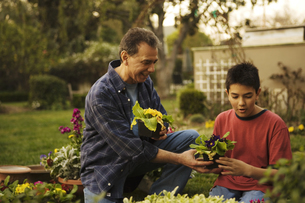 Grandpa and grandson gardening togetherの写真素材 [FYI01992420]