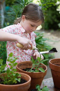Girl potting plantsの写真素材 [FYI01992803]