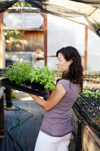 Woman carrying potted plantsの写真素材 [FYI01993148]