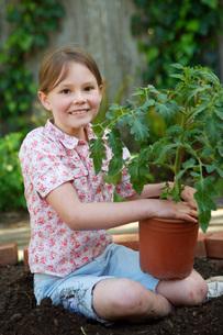 Girl planting tomato plantの写真素材 [FYI01993154]