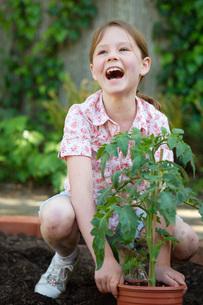 Girl planting tomato plantの写真素材 [FYI01993415]