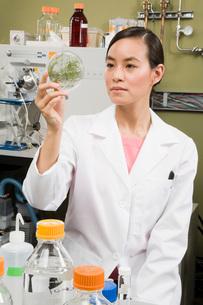 scientist examining petri dishの写真素材 [FYI01993679]