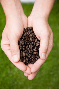 Person holding coffee beansの写真素材 [FYI01993918]