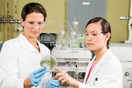 ethnic scientists examining petri dishの写真素材 [FYI01994143]