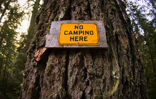 No Camping Here sign posted on treeの写真素材 [FYI01994165]