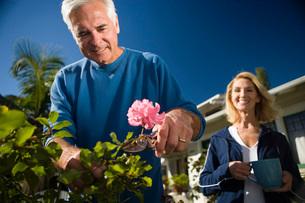 Senior couple gardeningの写真素材 [FYI01994328]