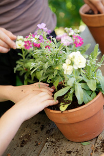 Mother and daughter potting plantsの写真素材 [FYI01994345]