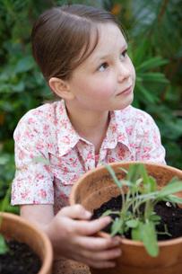 Girl potting plantsの写真素材 [FYI01994523]