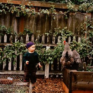 Young boy watching chickenの写真素材 [FYI01997045]