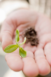 Person holding seedling and rootsの写真素材 [FYI01997212]