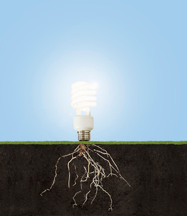 Compact fluorescent light bulb with underground rootsの写真素材 [FYI01997238]