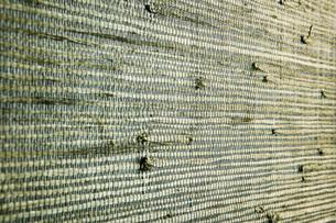 Green Textured Wallpaperの写真素材 [FYI01997381]