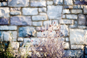 Stone Wall and Plants in Outdoor Landscapingの写真素材 [FYI01997445]