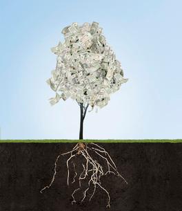 Money tree with underground rootsの写真素材 [FYI01997733]