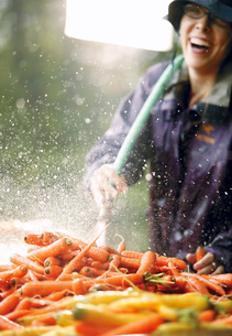 Woman washing carrots with hose outdoorsの写真素材 [FYI01997938]