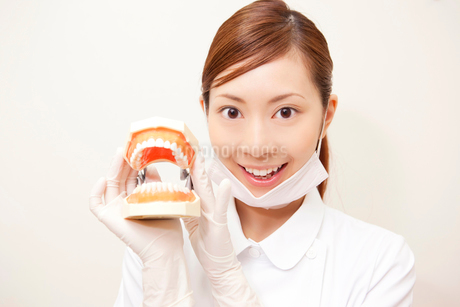 歯の模型を持つ歯科衛生士の写真素材 [FYI02000104]