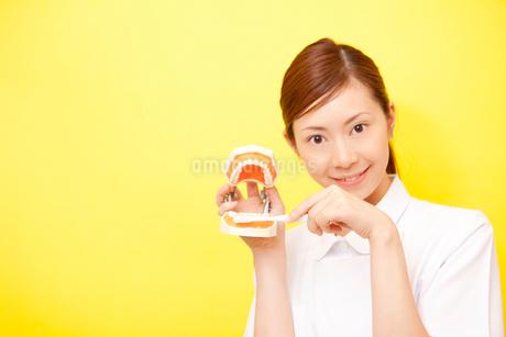歯の模型と歯ブラシを持つ歯科衛生士の写真素材 [FYI02000203]