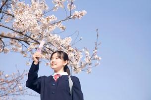 携帯電話で桜を撮影する女子中学生の写真素材 [FYI02001611]