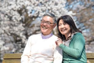 ベンチに座り桜を眺めるシニアカップルの写真素材 [FYI02002242]