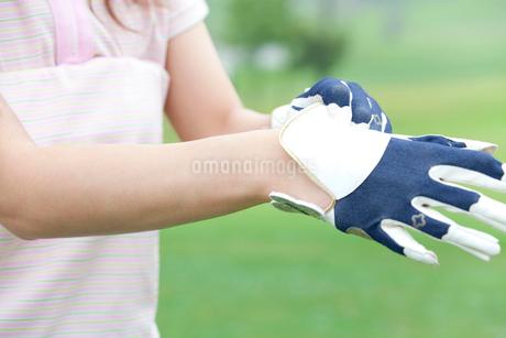 ゴルフグローブをはめる女性の手元の写真素材 [FYI02002276]