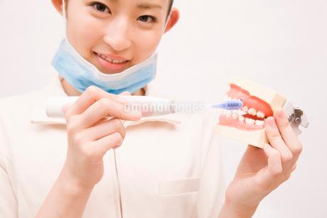 歯磨き指導を行う歯科衛生士の写真素材 [FYI02002821]