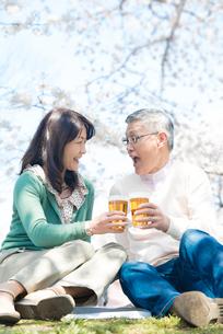 桜の下でビールを飲むシニアカップルの写真素材 [FYI02002869]