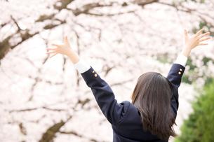 桜並木の下で伸びをする女子中学生の後ろ姿の写真素材 [FYI02002875]