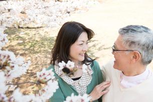 桜のしたで見つめ合うシニアカップルの写真素材 [FYI02003031]