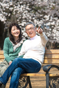 ベンチに座り桜を眺めるシニアカップルの写真素材 [FYI02003318]