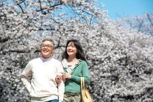 桜の下を散歩するシニアカップルの写真素材 [FYI02003356]