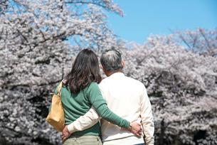 桜の下を散歩するシニアカップルの後ろ姿の写真素材 [FYI02003395]
