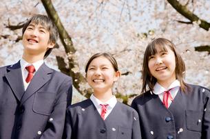 桜の下で笑っている中学生3人の写真素材 [FYI02003557]