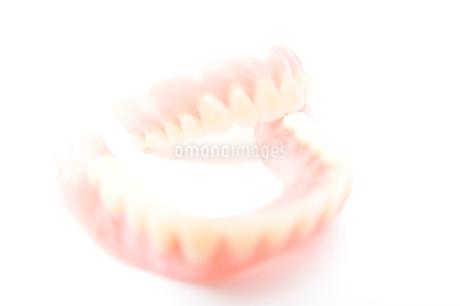 歯の模型の写真素材 [FYI02004430]
