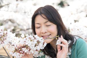 桜の香りをかぐシニア女性の写真素材 [FYI02004586]