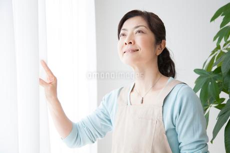 カーテンを開ける主婦の写真素材 [FYI02006663]