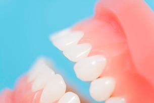 歯の模型の写真素材 [FYI02006697]