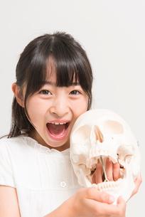 骸骨の模型と女の子の写真素材 [FYI02007238]