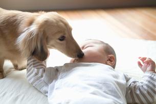 寝ている赤ちゃんの顔を舐める犬の写真素材 [FYI02009610]