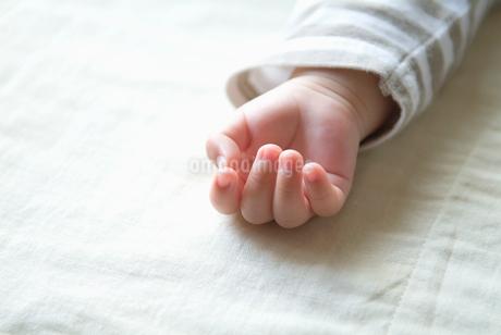 赤ちゃんの手の写真素材 [FYI02009686]