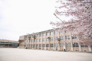 桜と校舎の写真素材 [FYI02011115]