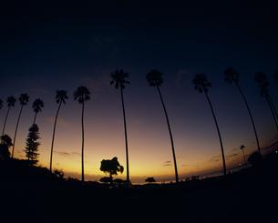 夕焼けとヤシの木の写真素材 [FYI02011890]