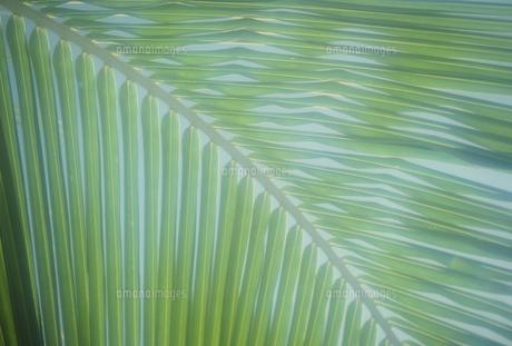 ヤシの写真素材 [FYI02012161]