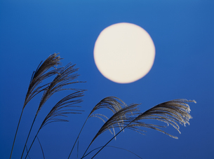 ススキと月の写真素材 [FYI02012305]