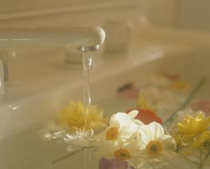 洗面所に浮かべた花の写真素材 [FYI02012379]