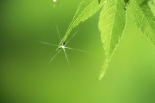 葉と水滴の写真素材 [FYI02012511]