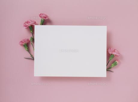 花カードの写真素材 [FYI02012579]