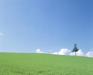 草原と空と木の写真素材 [FYI02013314]