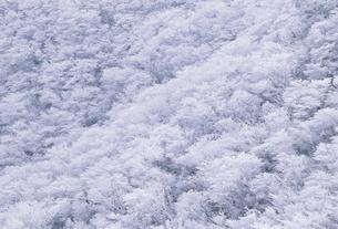 樹氷の写真素材 [FYI02013445]