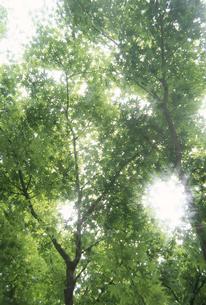 新緑と木漏れ日の写真素材 [FYI02014538]