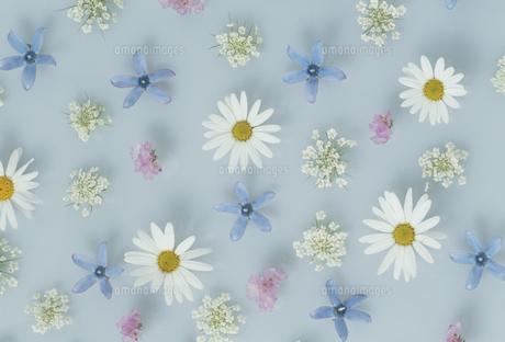 散りばめた花の写真素材 [FYI02015080]